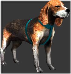 beagle_b