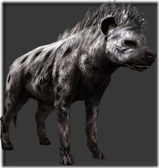 hyena_leader