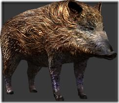 wild_boar